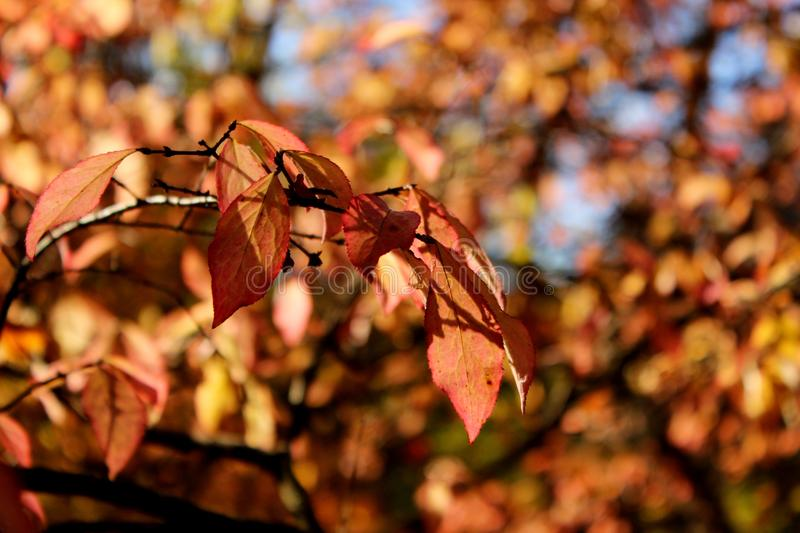 Autumn leaves in Botanical Garden stock photography