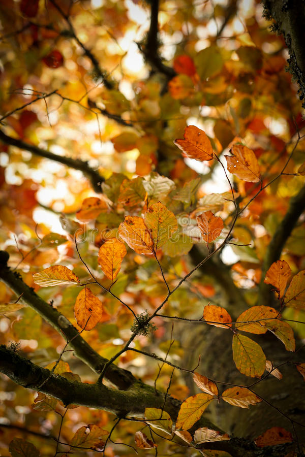 Autumn leaves on a branch royalty free stock photography