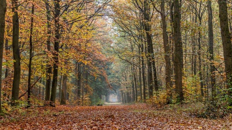 Autumn, Autumn, Leaves, Branches stock photos
