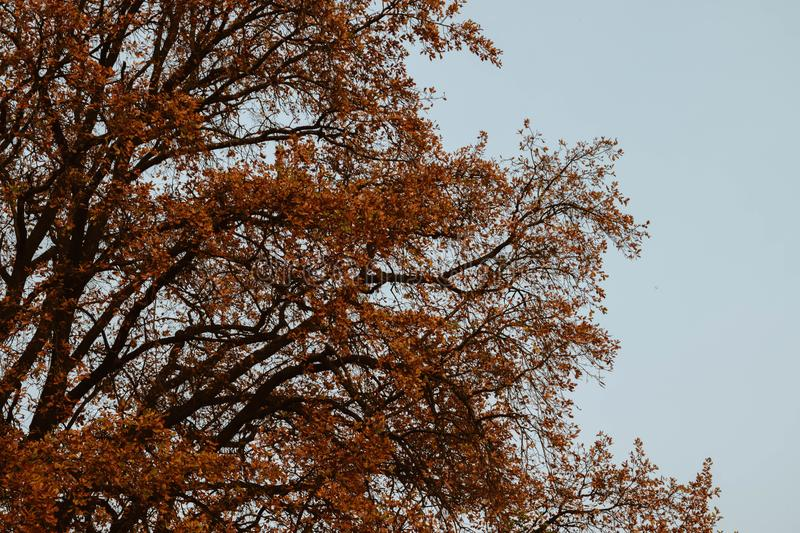 Autumn, Leaves, Branches stock image