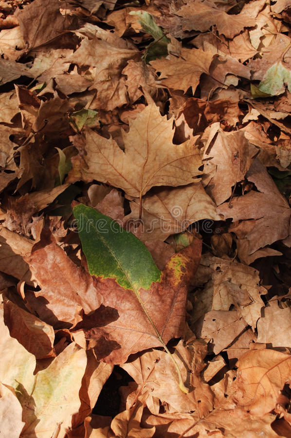 Autumn leaves carpet royalty free stock images