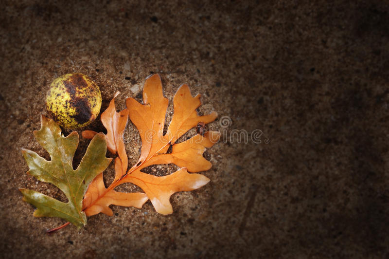 Autumn Leaves With Chestnut foto de stock royalty free