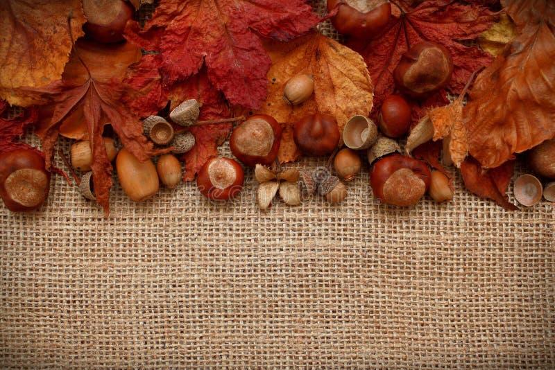 Autumn Leaves Chestnuts och ekollonar över jutebakgrund fotografering för bildbyråer
