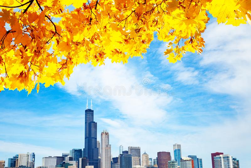 Autumn leaves and Chicago waterfront lake skyline royalty free stock photos