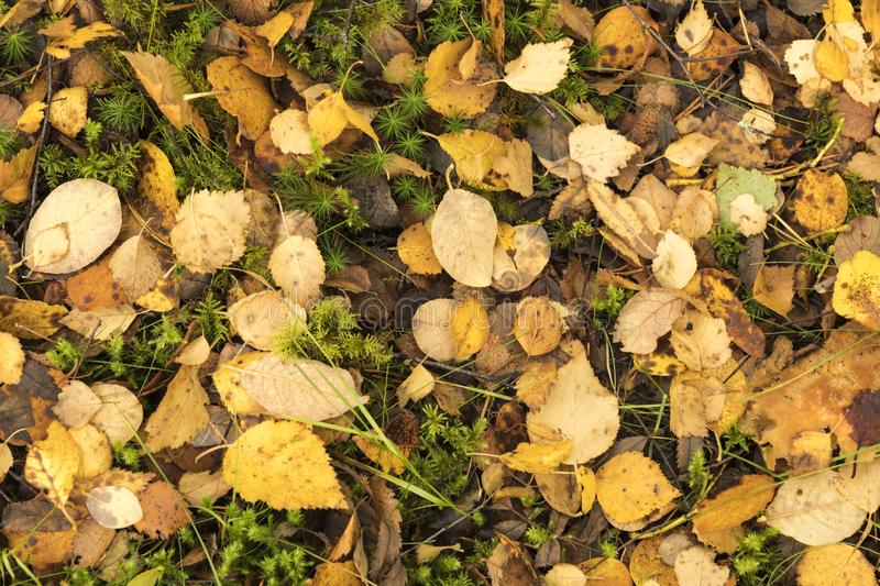 Autumn Leaves. A close-up view from above of dead leaves from various species of trees covering the ground in a scottish forest in Autumn. 18 October 2018 royalty free stock photography