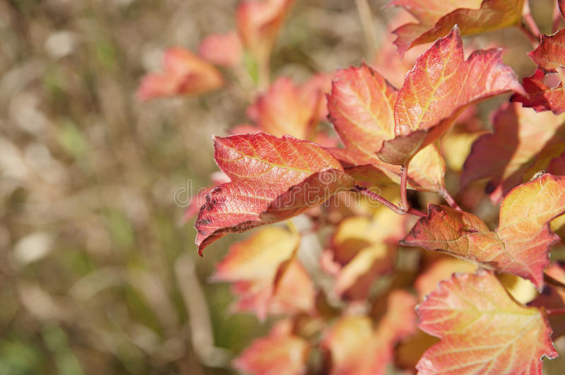 Autumn leaves closeup royalty free stock photography