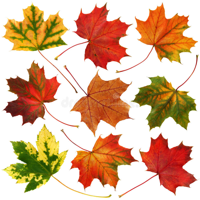 Autumn leaves collection stock photography