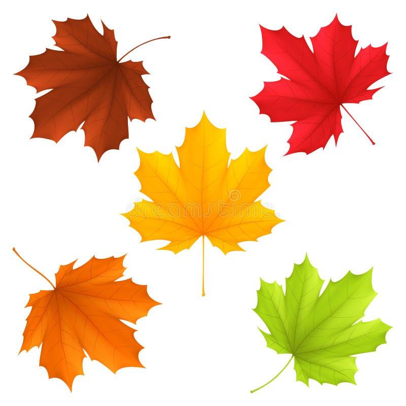 Autumn leaves. royalty free illustration