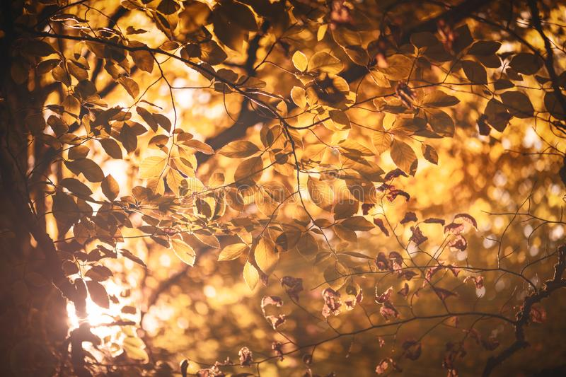 Autumn leaves color. Background with sunlight stock photos