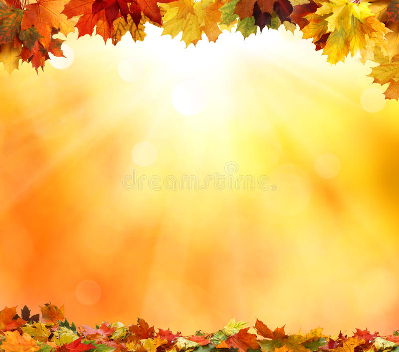 Autumn leaves. On colorful background stock photos