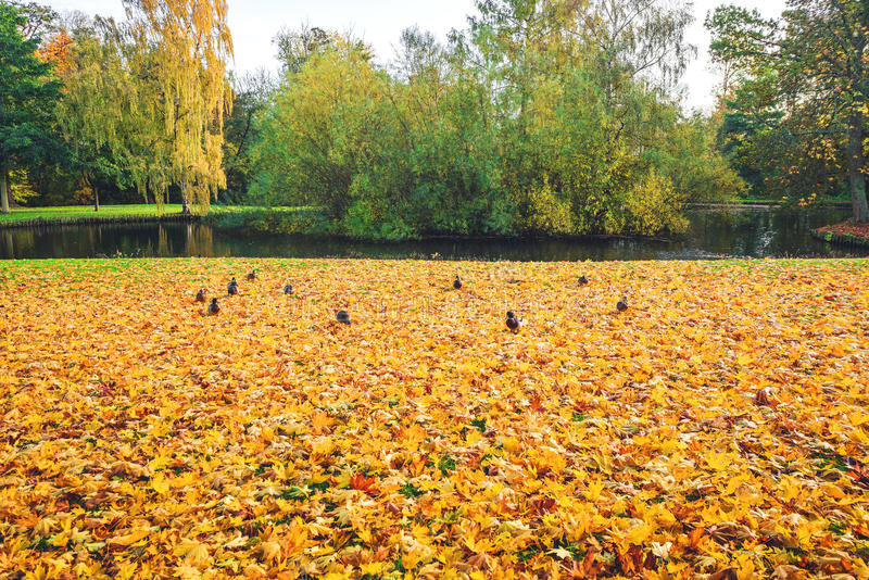 Autumn leaves covering the ground near a lake stock photography