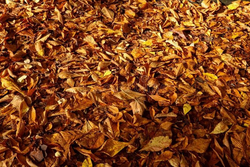 Autumn Leaves Covering un campo in Scozia immagini stock