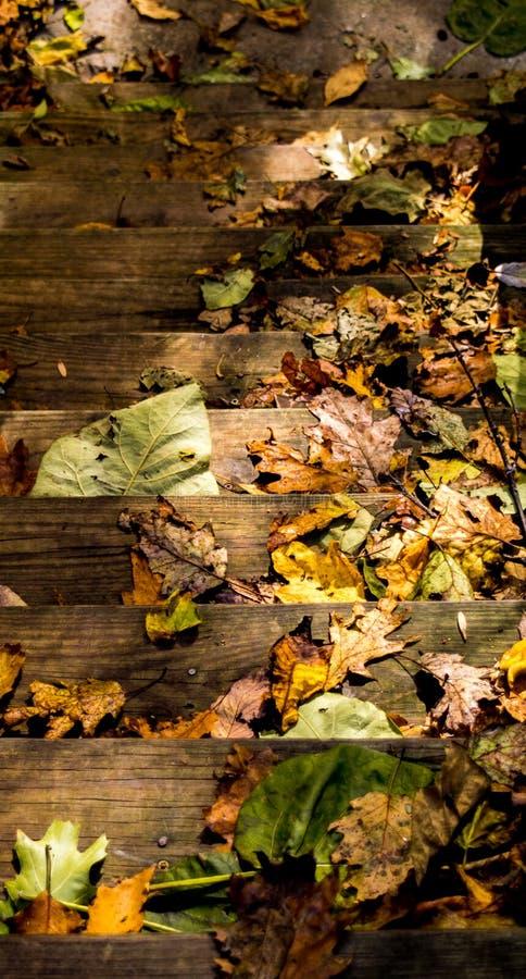 Autumn Leaves Covering Wooden Steps fotografia stock