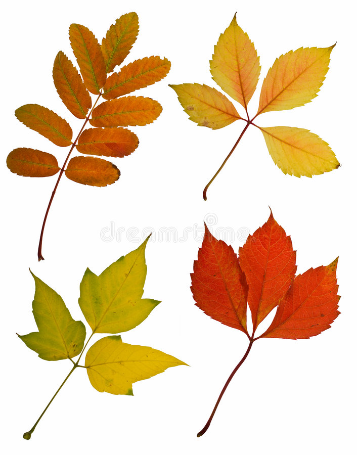Download Autumn leaves cutout stock photo. Image of green, leaves - 3688702