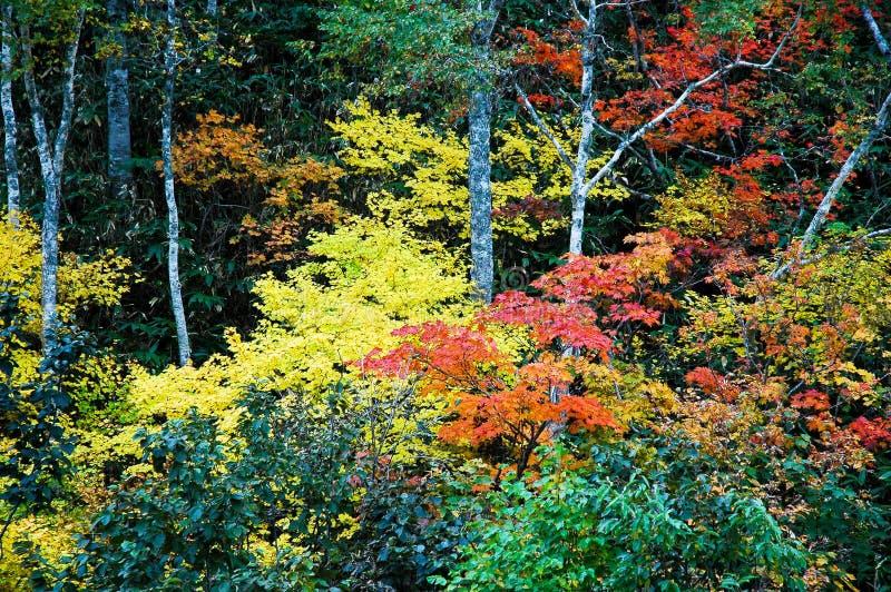 Autumn Leaves dans Shiretoko, Hokkaido, Japon images libres de droits