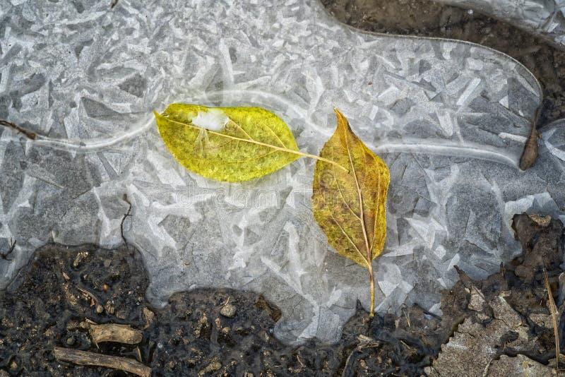Autumn Leaves dans une forêt sur la glace photographie stock