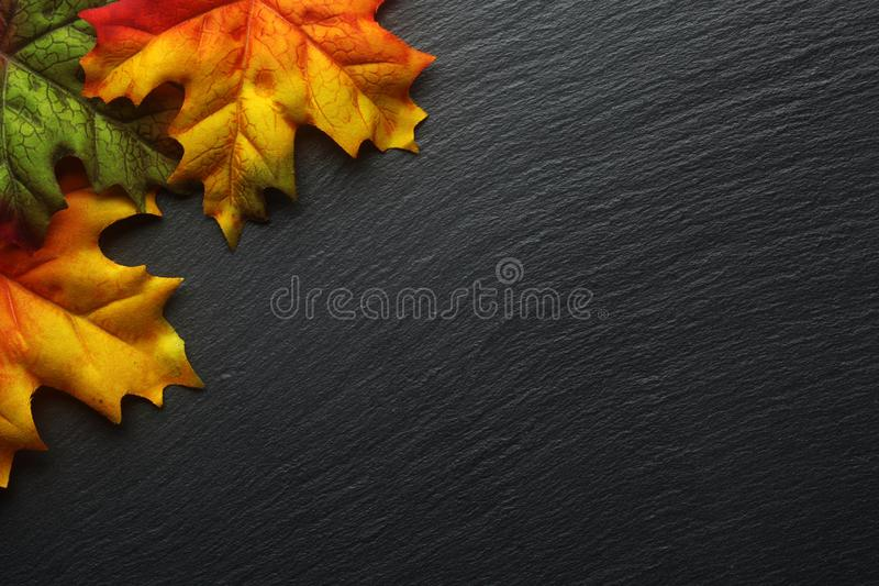 Download Autumn Leaves On A Dark Slate Stock Image - Image: 100815577