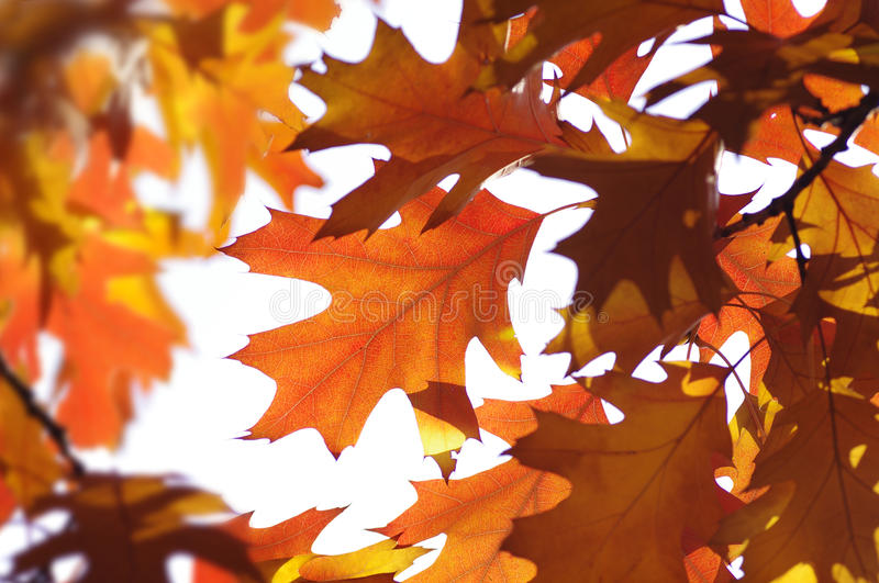 Autumn leaves. In the day royalty free stock image