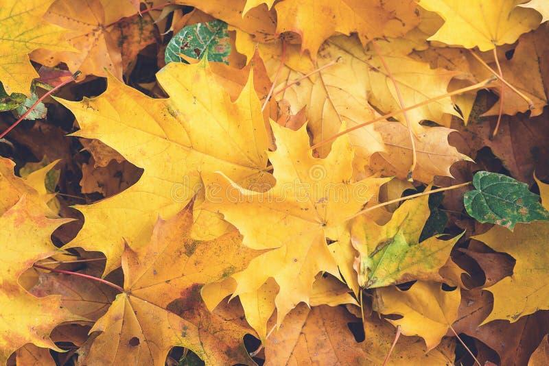 Autumn Leaves De achtergrond van de herfst Rode en oranje het bladclose-up van de kleurenKlimop Gevallen gele esdoornbladeren Hoo royalty-vrije stock foto's