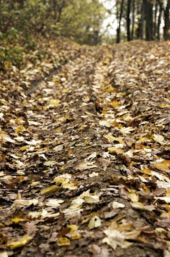 Autumn leaves on dirt road in Romanian woodland. Close-up of leaves in autumn yellow brown colours on dirt road track in Romanian forest woodland stock images