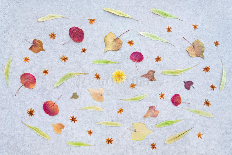 Autumn leaves and dried flowers on concrete background stock photography