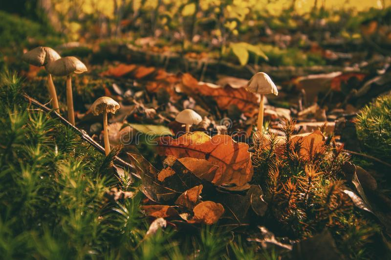 Autumn, Leaves, Dry royalty free stock photo