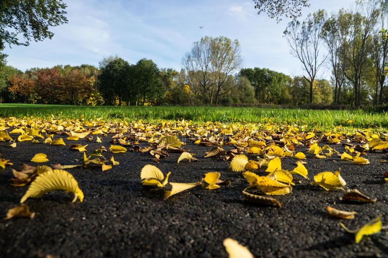 Autumn Leaves. The early stages of autumn where the fallen leaves are still fresh and colorful stock photos