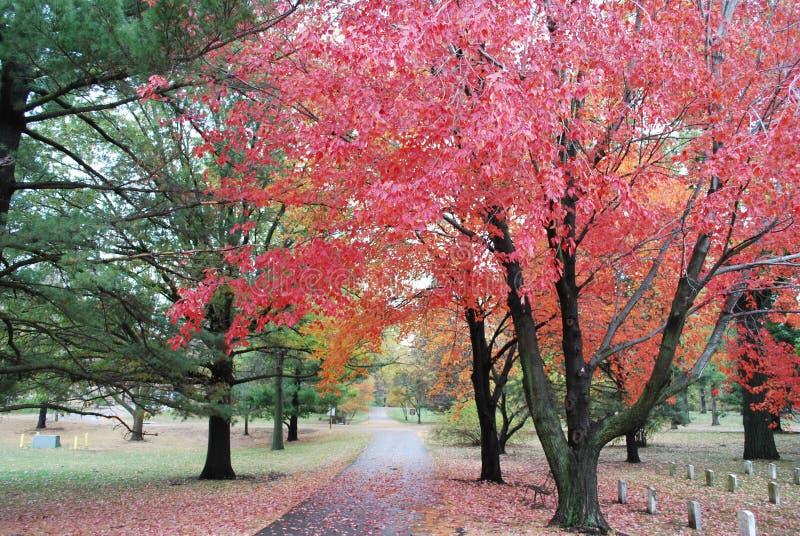 Autumn Leaves in een Veteranenbegraafplaats royalty-vrije stock fotografie