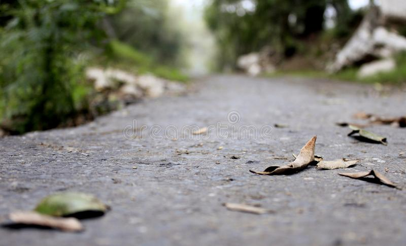 Autumn leaves on empty road royalty free stock photo