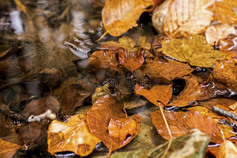 Autumn Leaves en arroyo Autumn Concept Wallpaper foto de archivo