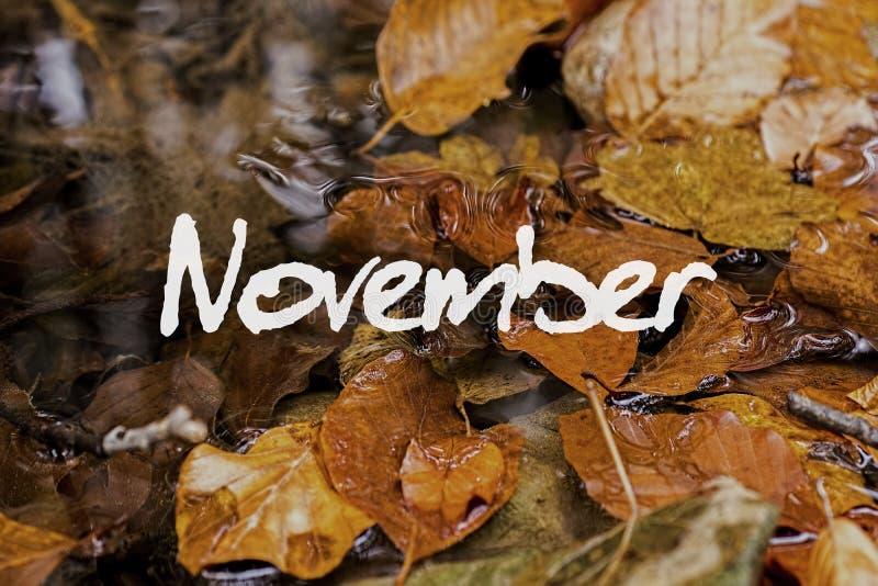 Autumn Leaves en arroyo Papel pintado del concepto de noviembre fotos de archivo libres de regalías