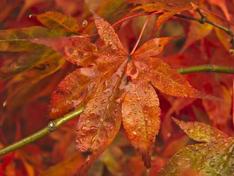 Autumn Leaves Fall fotografia stock