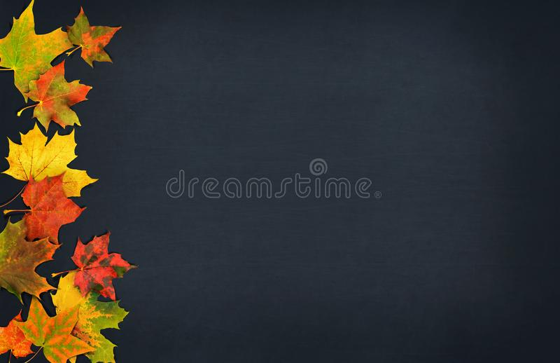 Autumn leaves. Fall colorful maple leaves on dark background. Top view stock photography