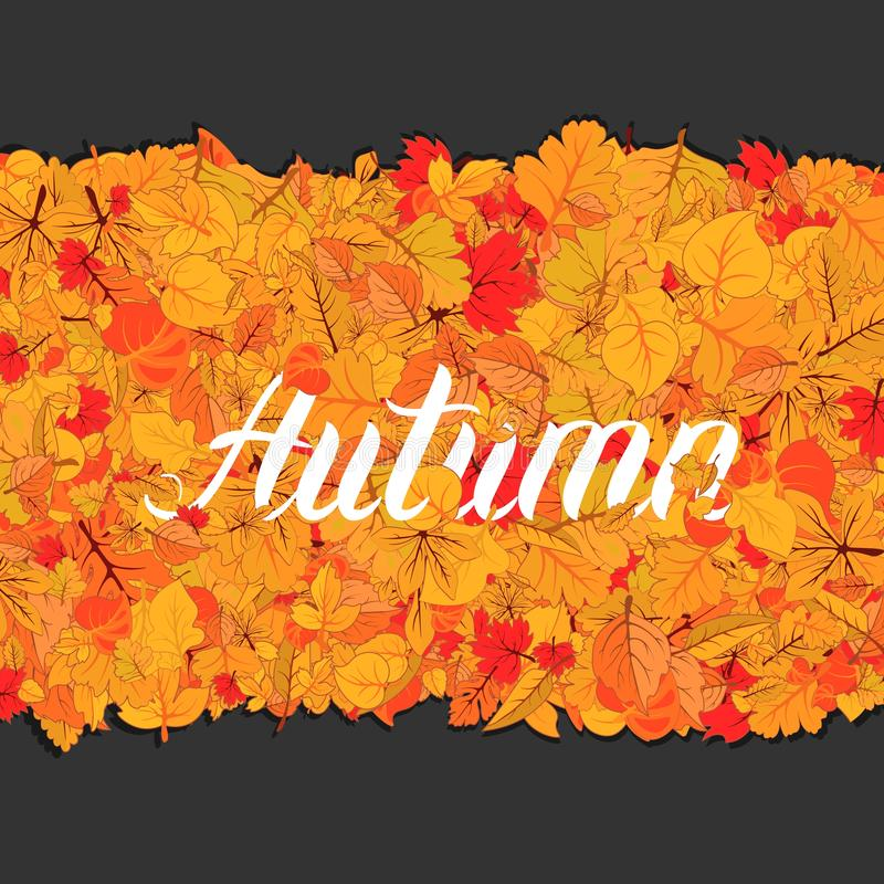 Autumn leaves fall isolated background. Golden autumn poster template. Vector illustration. Autumn leaves fall isolated background with lettering. Golden autumn royalty free illustration