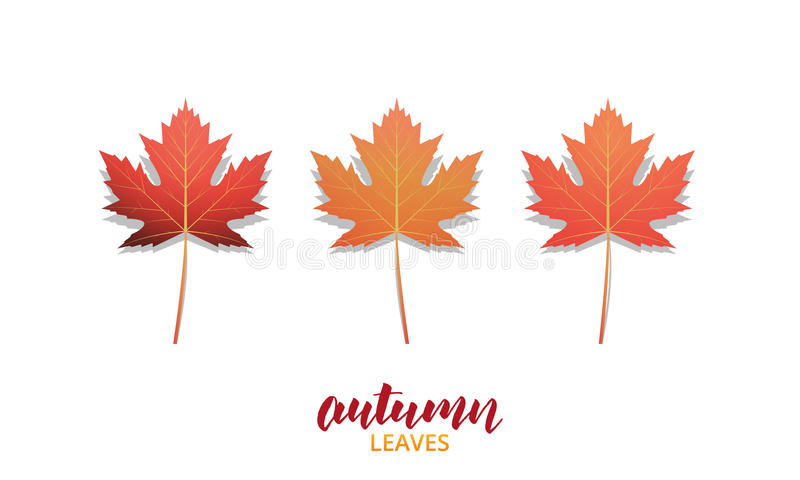 Autumn leaves. Fall leaves design collection for ad, banner, background etc. Autumn vector leaves isolated on white.  royalty free illustration