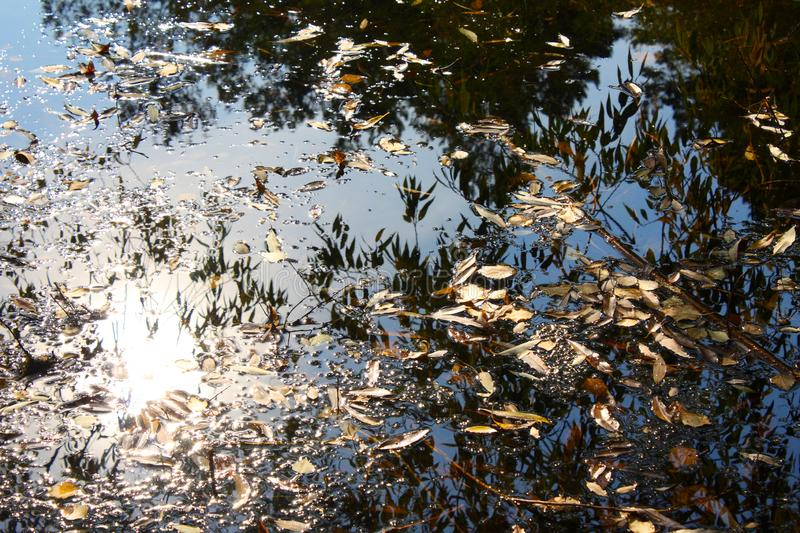 Autumn leaves fall in the pond. Autumn leaves in the water. Beautiful reflection of trees royalty free stock photos