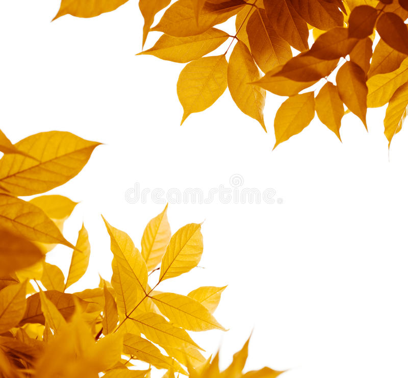 Autumn leaves, fall season. Autumn leaves over white background. leaf border with yellow, orange, brown colors, fall season stock photos