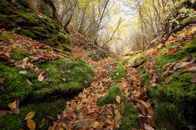 Download Autumn Leaves Fallen On Green Moss In A Valley In The Forest Stock Image - Image: 37184199