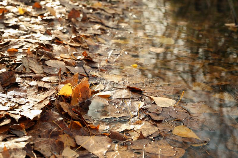 Autumn leaves fallen on ground near lake in park stock image