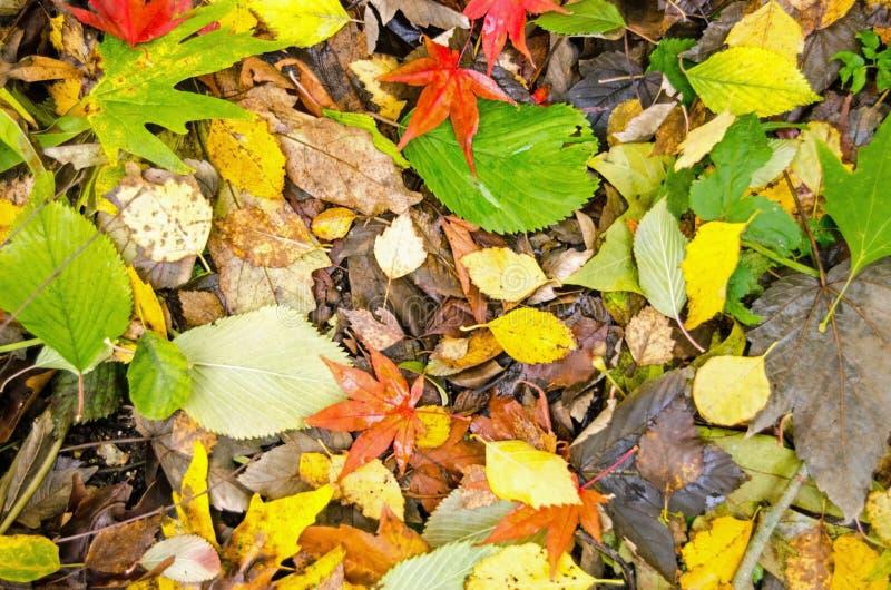 Download Autumn leaves stock image. Image of season, nature, orange - 35180549