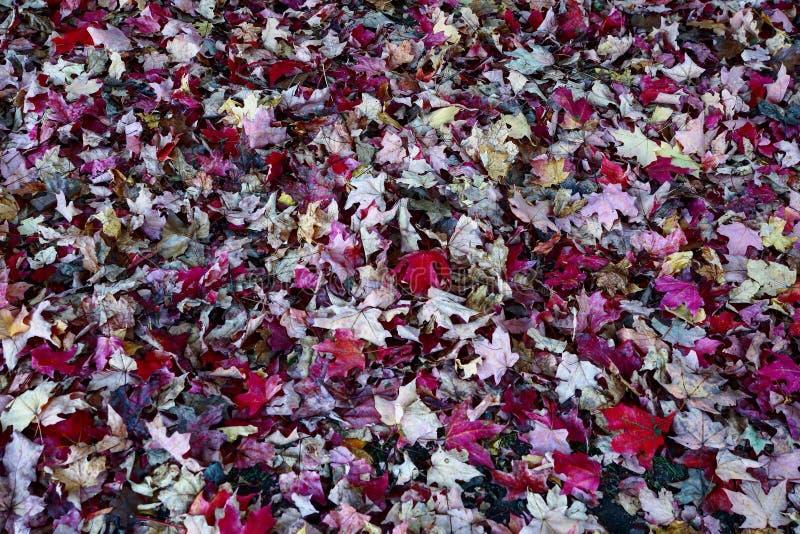 Autumn Leaves Falling stock afbeeldingen