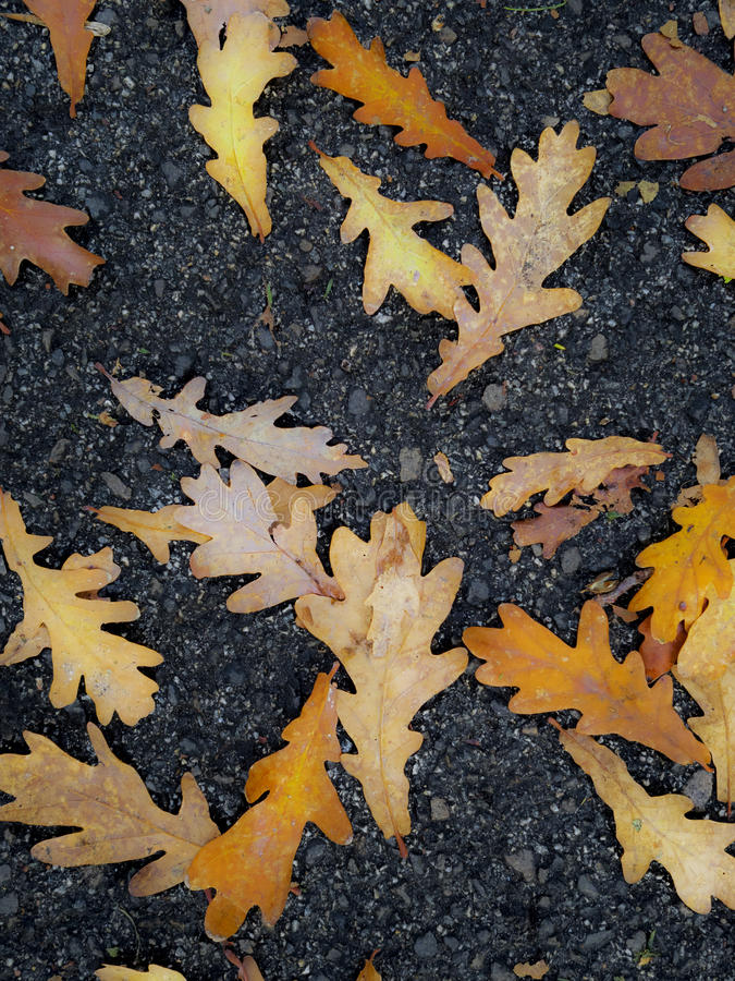 Autumn leaves. That fell from the tree stock image
