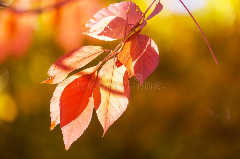 Autumn Leaves images stock
