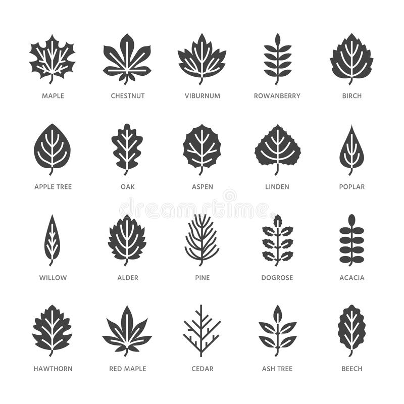 Autumn leaves flat glyph icons. Leaf types, rowan, birch tree, maple, chestnut, oak, cedar pine, linden, guelder rose royalty free illustration
