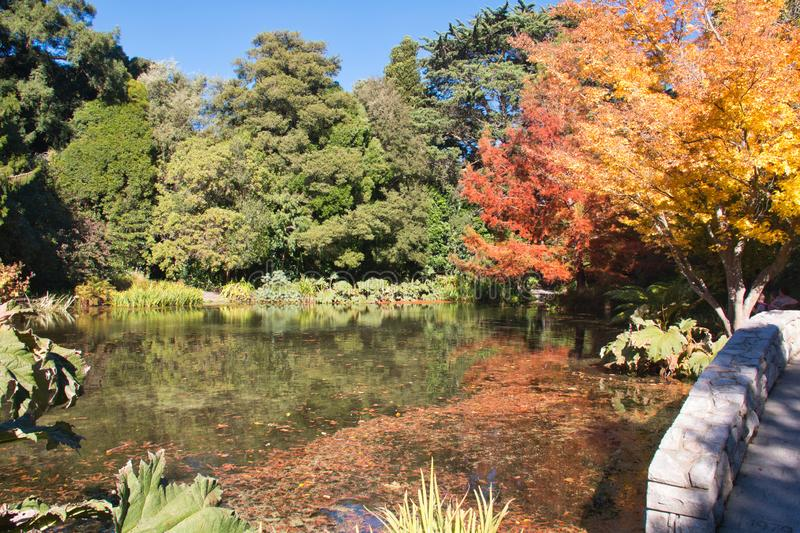 Autumn leaves float in a placid lake stock photo