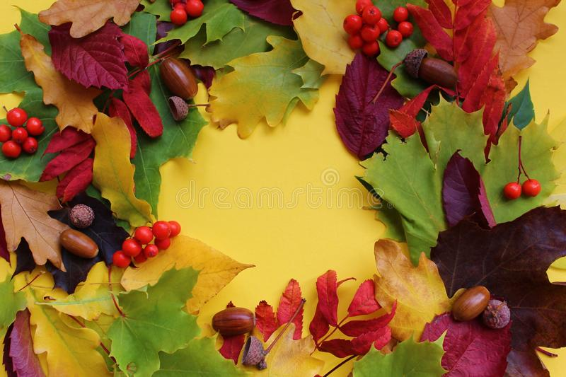 Autumn leaves folded around on a yellow background with berries and acorn royalty free stock images