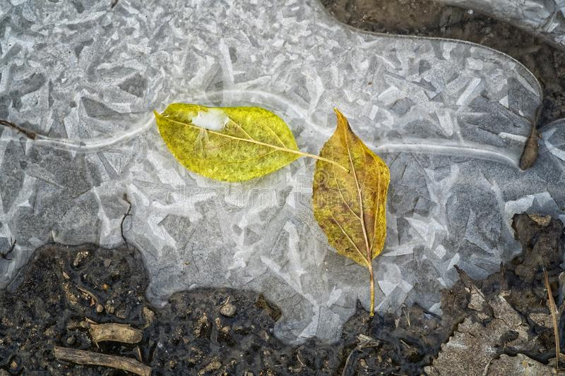 Autumn Leaves in a Forest on Ice. Leaves engraved in ice on a Autumn day in a forest stock photography