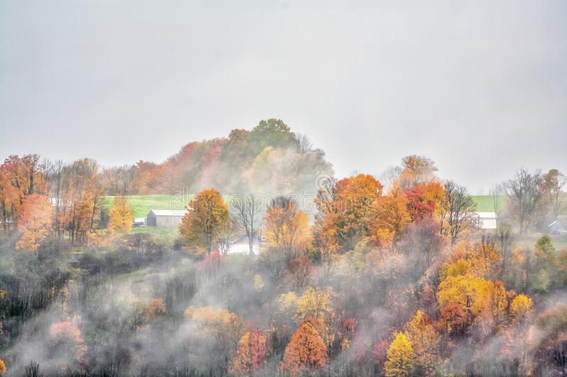 Autumn leaves in forest in rural vermont stock image