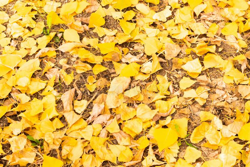 Autumn leaves in the forest on a sunny day stock photos