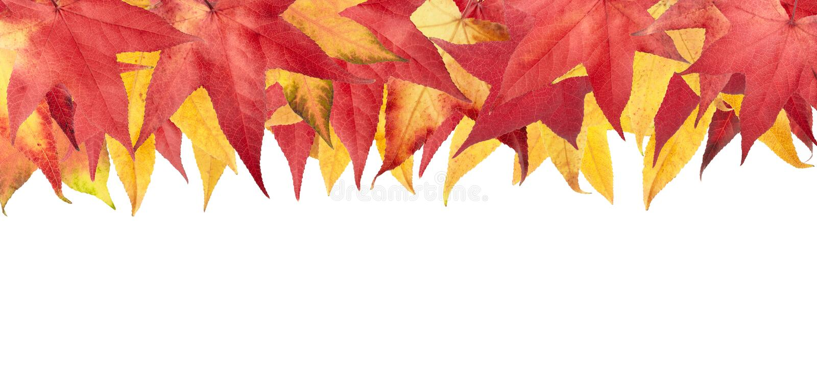 Download Autumn Leaves Frame Stock Photography - Image: 20849762